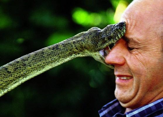 australia-snake
